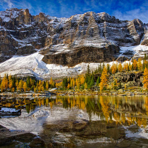 Lake Ohara Golden Larches