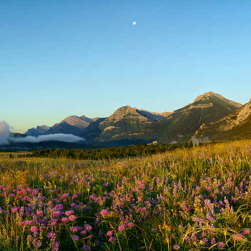 Waterton Wildflowers